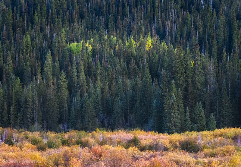 Kebler Pass Forest