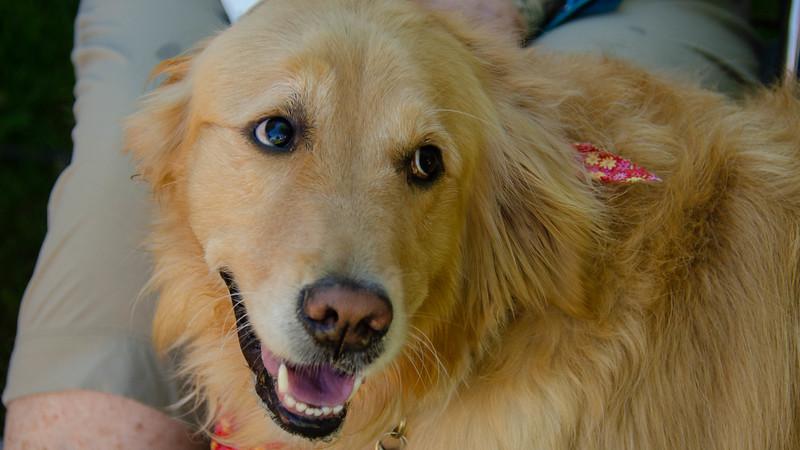 PuppyParty18-26.jpg