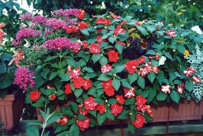 6-10-2000 Deck Flowers