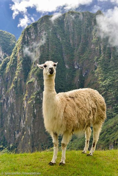 06.20_Machu Picchu-7701-2.jpg
