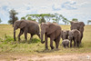 Breeding Herd in the Serengeti