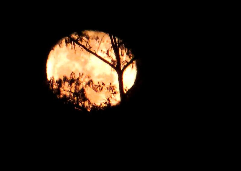 aIMG_1357 1386 full moon over alligator pond, Anahinga Trail EvG.jpg