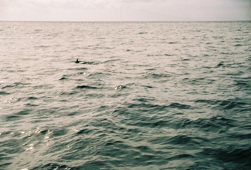 Hawaii-267.jpg