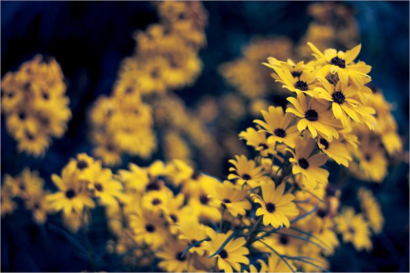20111015_Flower5.jpg