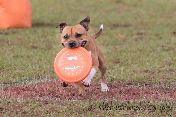 _MG_2245Up_dog_International_2016_StephaniellenPhotography.jpg