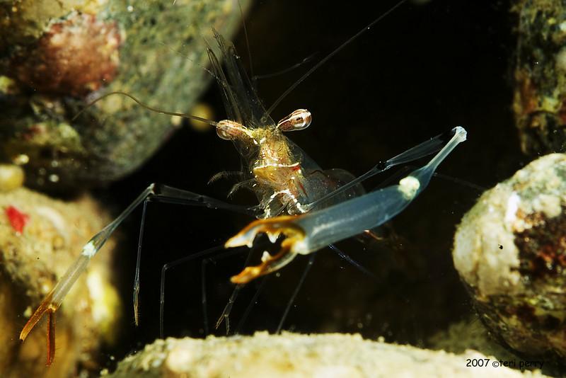 shrimp transparent (1)_1.jpg