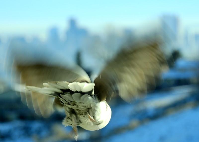 birds (201).JPG