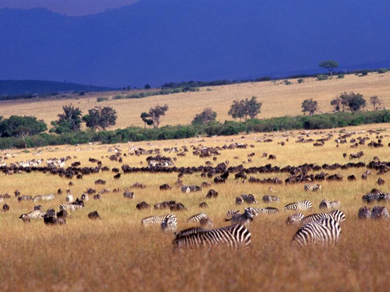 06 עדרים בסוואנה.jpg