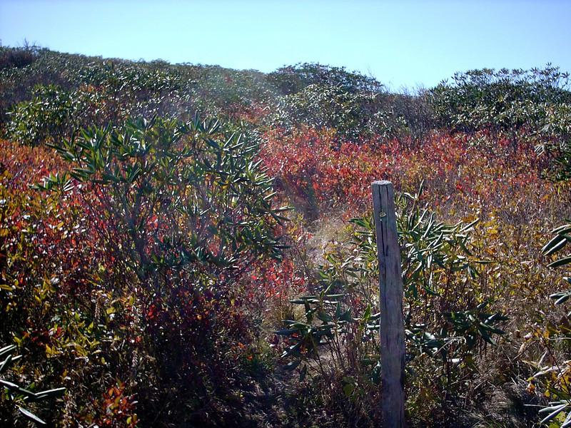 Art Loeb-Grassy Cove Summit Spur Trail Junction