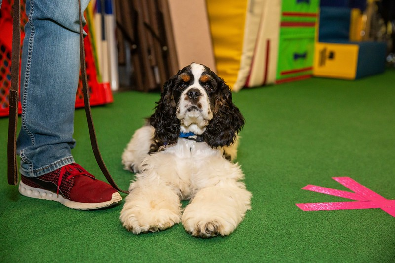 on Command dog Training June 2019-5158.jpg