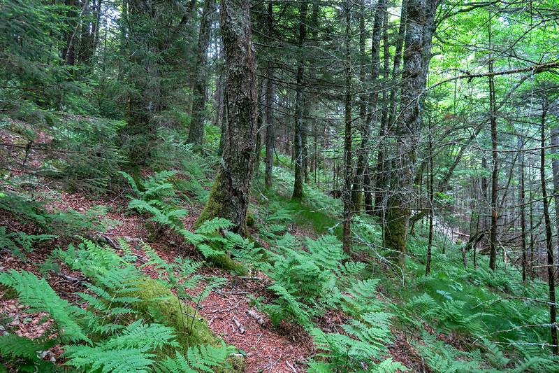 Green Mountain Trail -- 5,370'