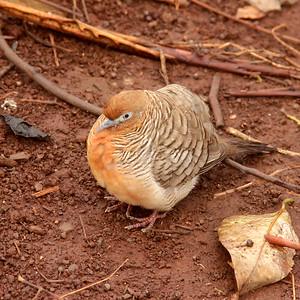 Hawaii Best Bird