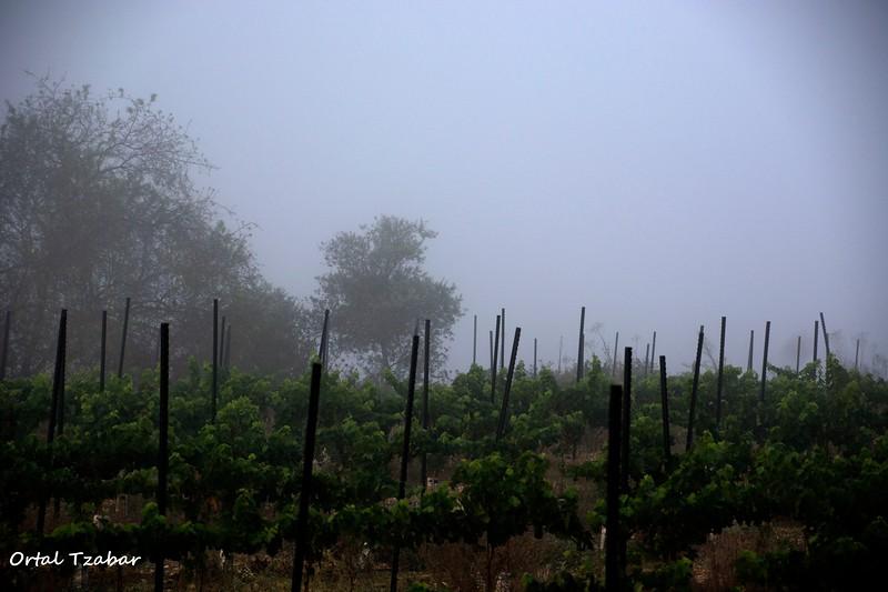 fog14.jpg