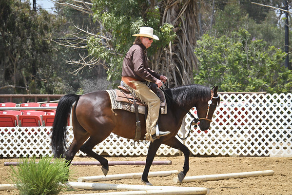 HA Trail Jr Horse Championship