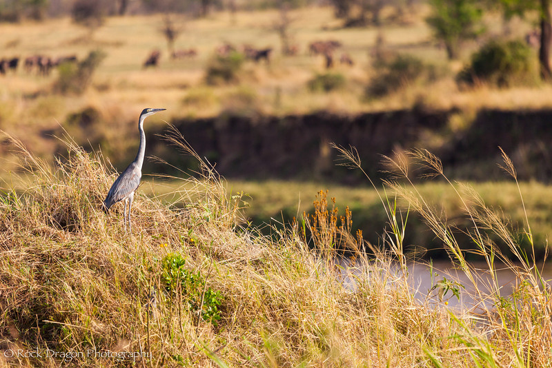 North_Serengeti-82.jpg