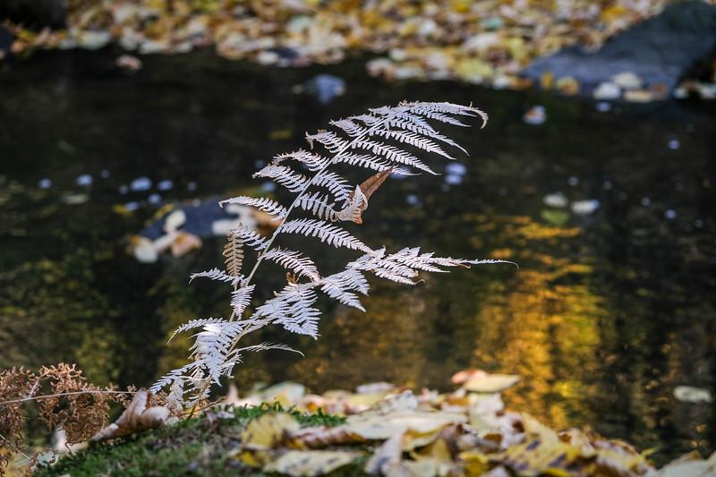 autumn2018-001.jpg