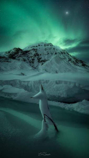 frozen-horse3.jpg