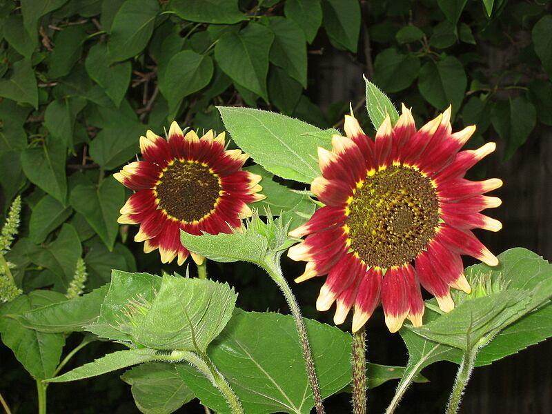 garden-2004-08-0222_std.jpg
