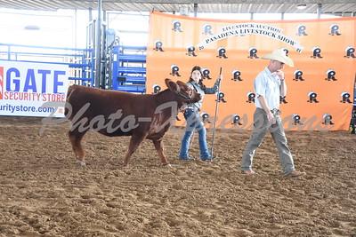9-28-21 Tuesday Heifer Show