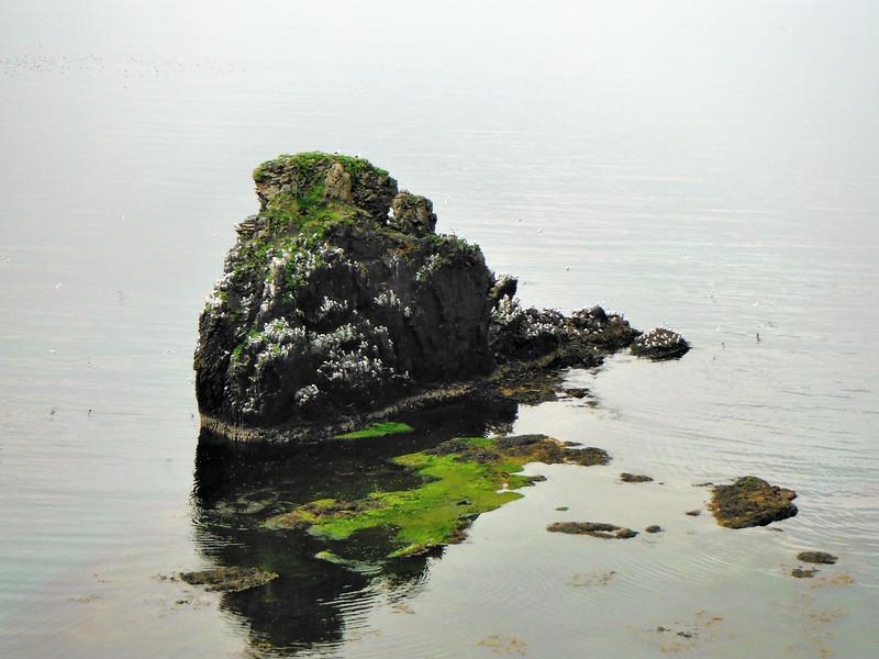 Í Rekavík bak Höfn
