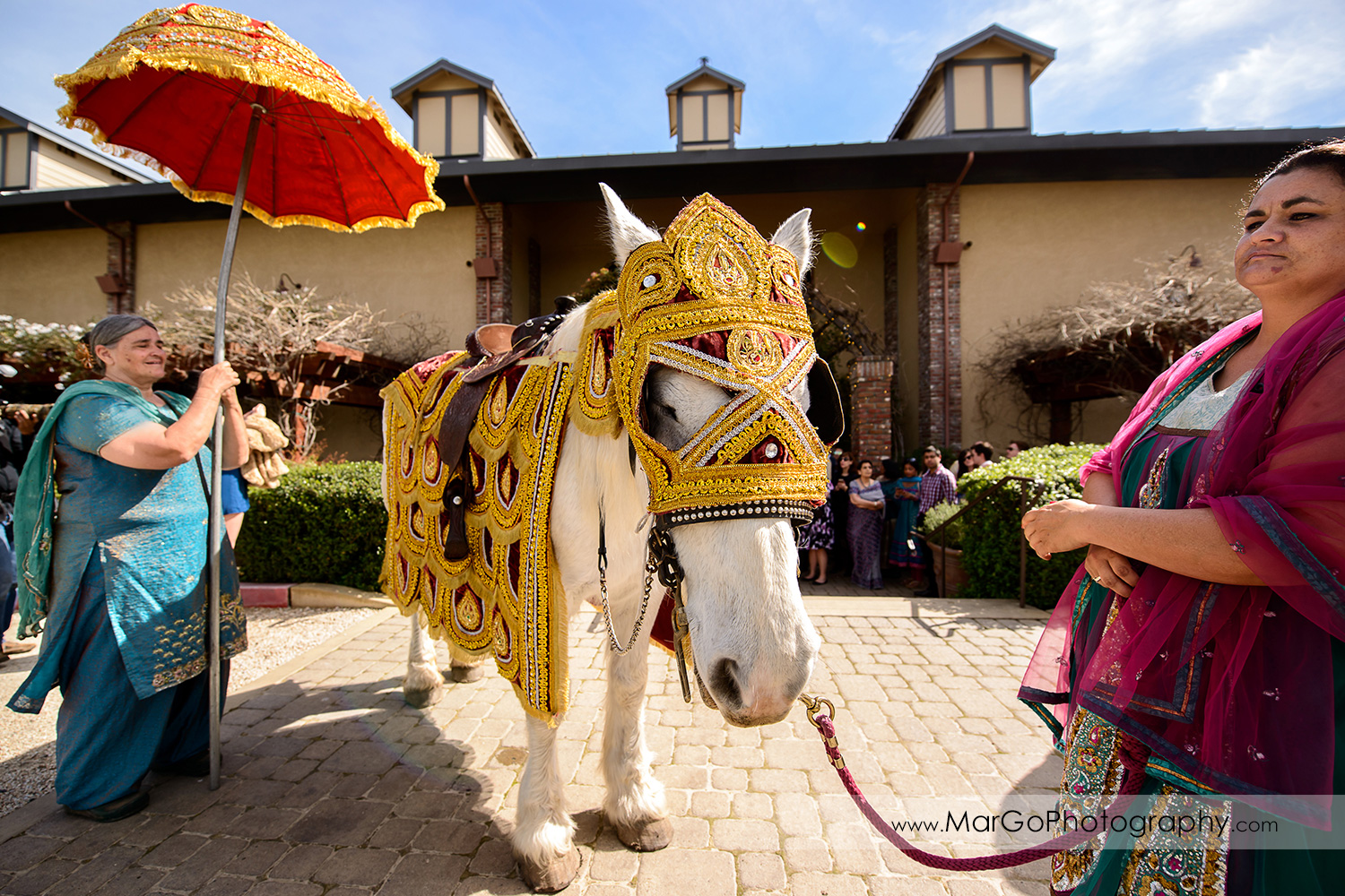 white baraat horse at Palm Event Center in the Vineyard in Pleasanton