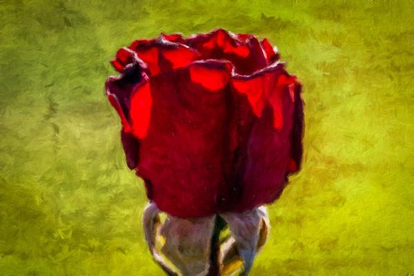May 13 - Red rose of spring.jpg