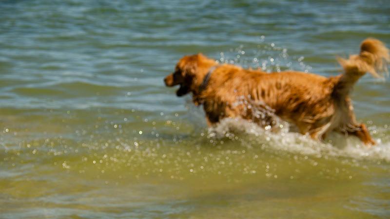 PuppyParty18-231.jpg