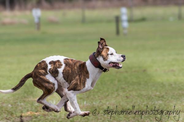 _MG_2691Up_dog_International_2016_StephaniellenPhotography.jpg