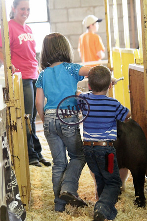 Madison County Open Swine Show