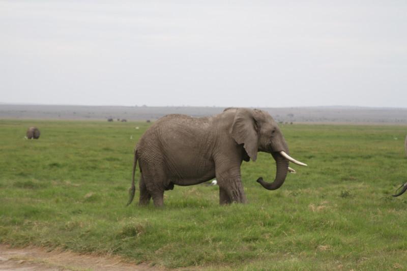Kenya 2019 #2 1575.JPG