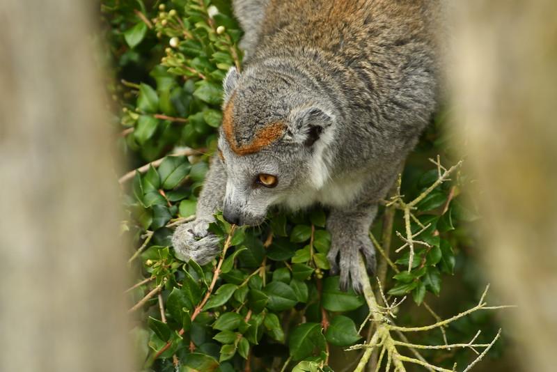 2016_San_Francisco_Zoo_July_ 0017.JPG