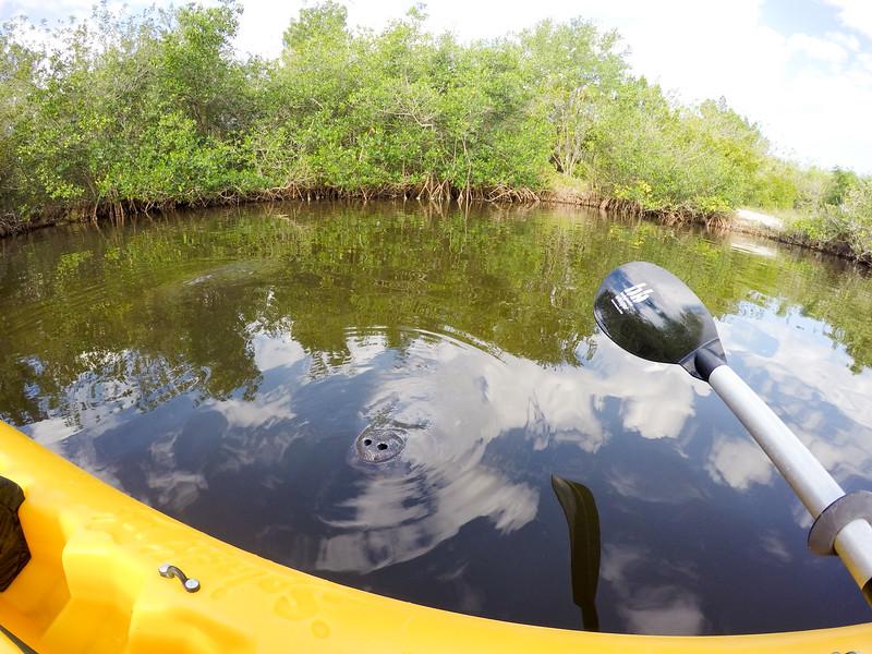 Kayaking with Calypso Kayak, Manatee Cove Park, Merritt Island, Florida.