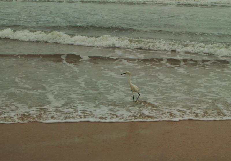 21 The Ocean is for the Birds Ormond Beach.jpg
