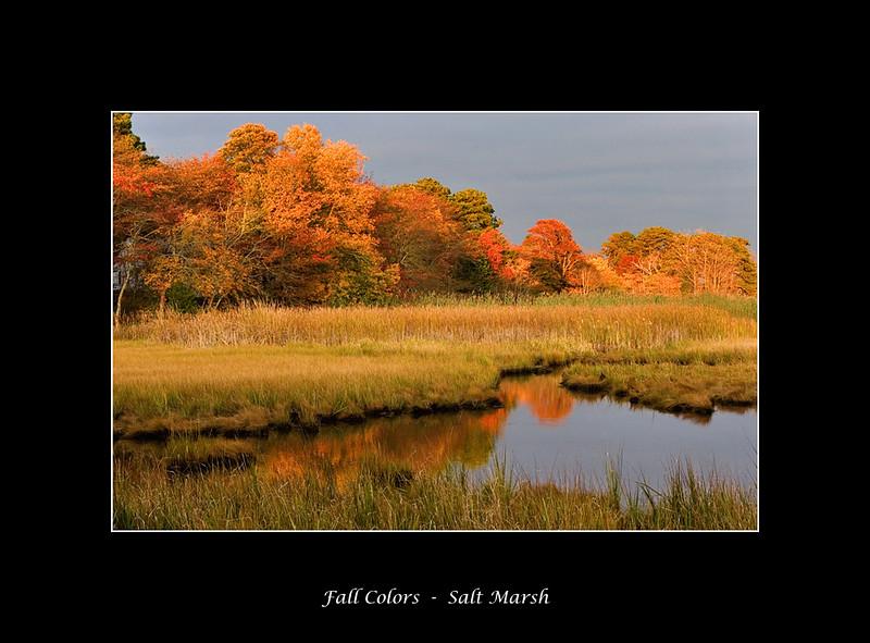 marsh-light2.jpg
