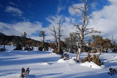 North Yellowstone Wildlife Jan2011