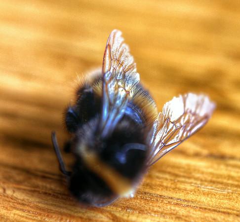 Bees Close Up