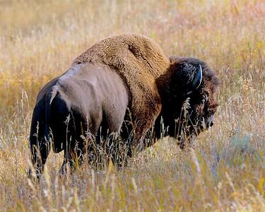 Yellowstone & Teton National Park September 2018
