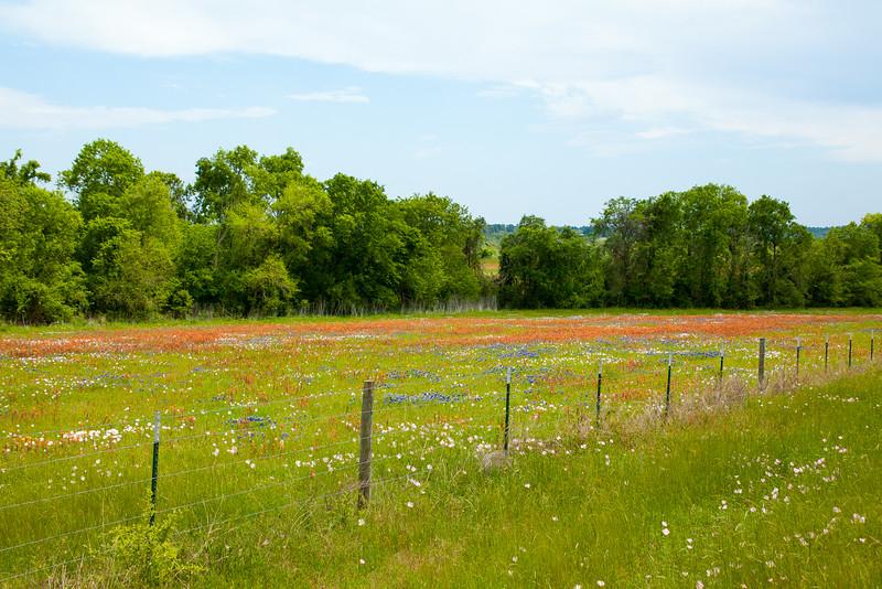 2016_4_9 Texas Wildflower Shoot-8419.jpg
