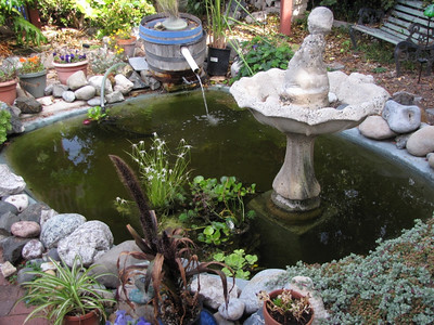 Our Pond