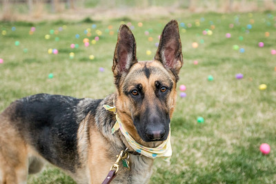 20170412 - Dog Easter Hunt (SN)