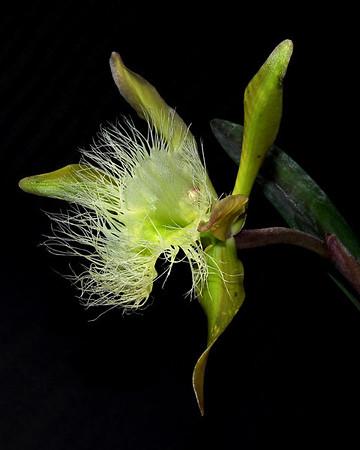 Orchids Q-Z