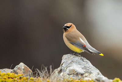 Avian Life