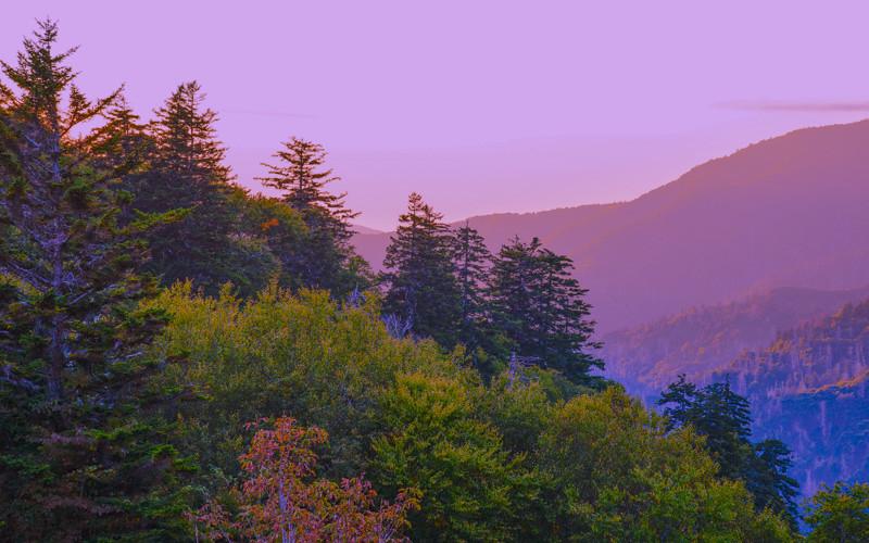 Smoky Mountains 42