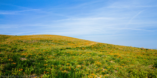 Antelope Valley California Poppy Reserve Collection