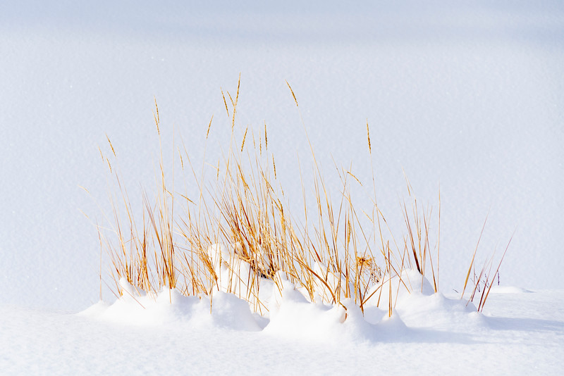 _AR70783 Grass in the snow.jpg