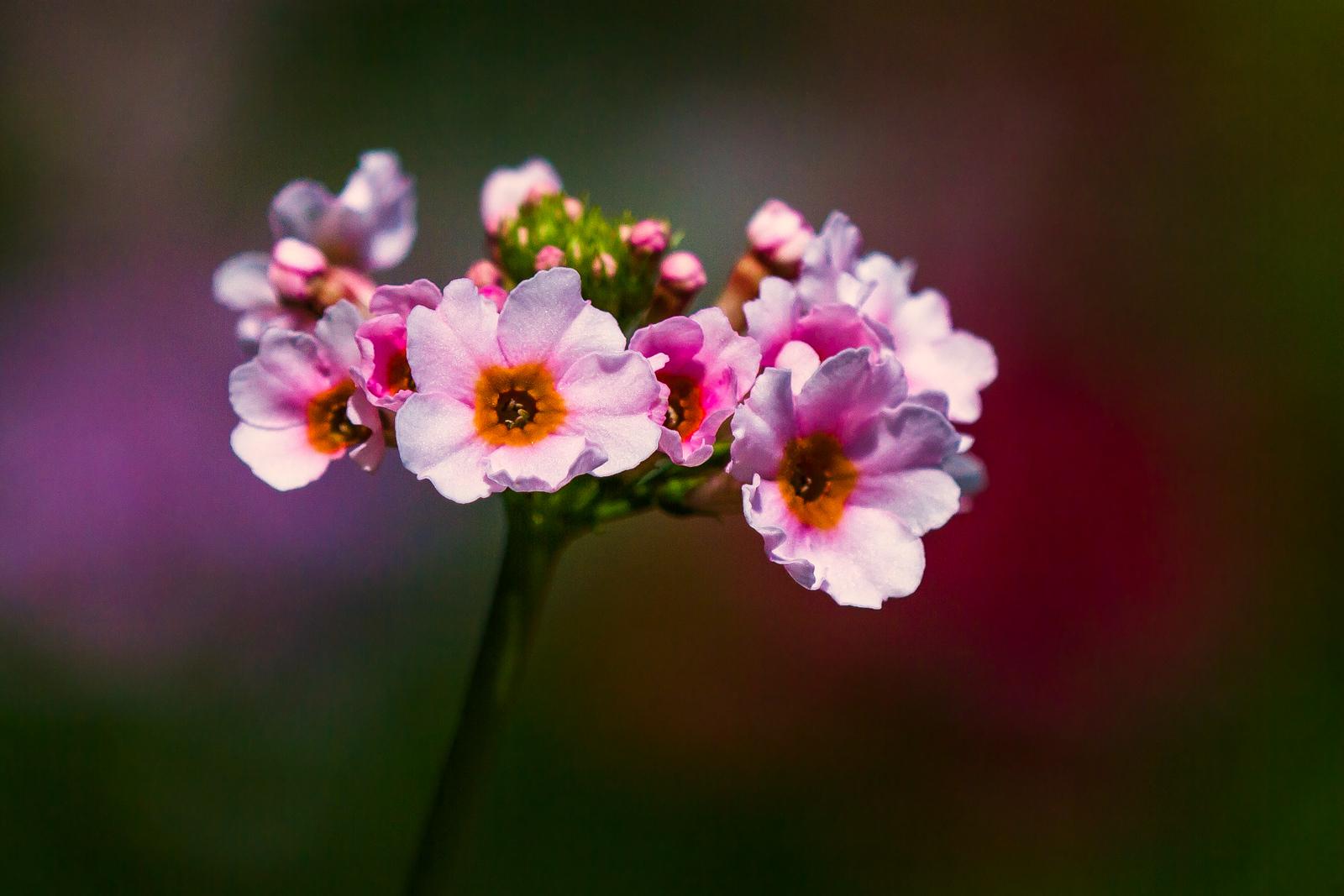 竹邊的小花