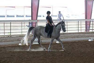 Horse 386