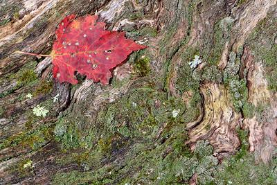 Catoctin Fall