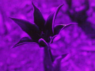 Flowers in UV