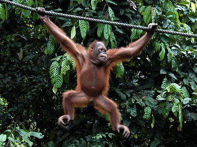 Malaysia - Borneo (Sabah) - 2005